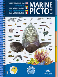 All Mediterranean sea-life, the Marine Pictolife describes more than 250 marine species. With its completely waterproof, plasticized pages, it easily fits into a diving vest pocket or a beachbag