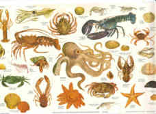BRITISH MARINE INVERTEBRATES