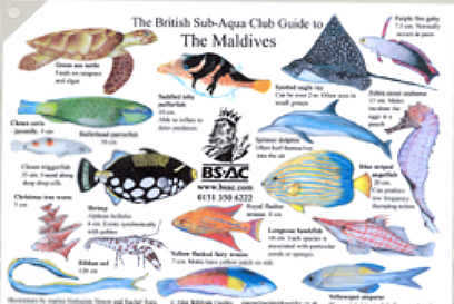 Marine life of the Maldives a British Sub-Aqua Club Identification Chart