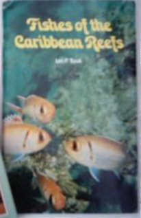 Caribbean Reef Fishes identification