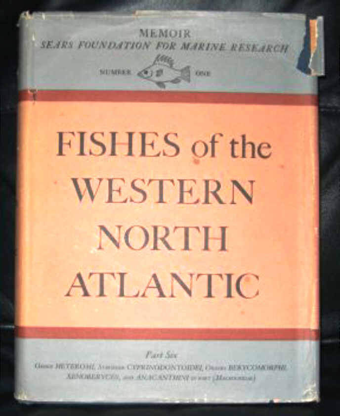 FISHES OF THE WESTERN NORTH ATLANTIC - PART SIX
