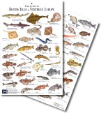 Guide to British Fish
