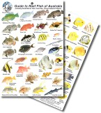 Guide to Reef Fish of Australia