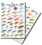 Guide to Reef Fish of Florida