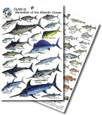 Guide to Atlantic Game Fish