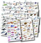Total Collection of Reef Fish Guides