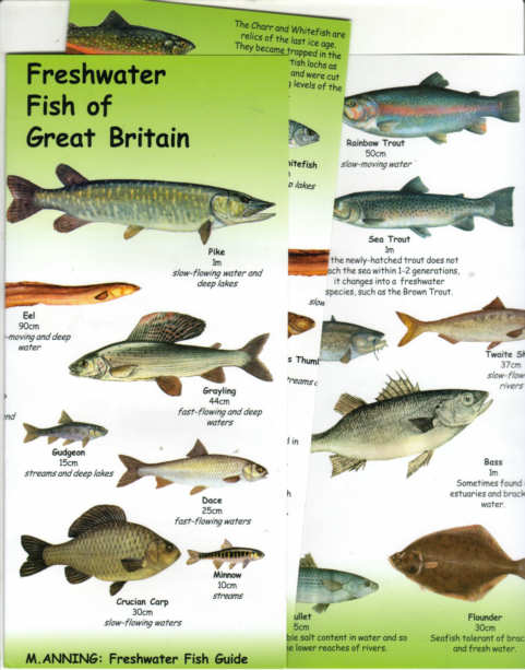 Freshwater fish chart the image kid has it for Freshwater fish guide