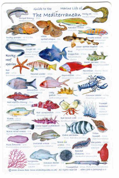 Aquarium fish names in alphabetical order