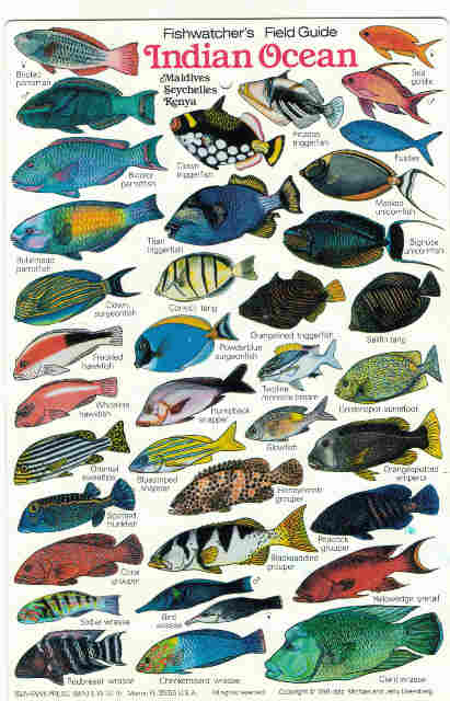 Indian Ocean Fish,fishes, Maldives Zanzibar fish diving books