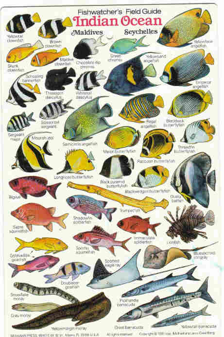 Pdf) coral reef fishes: common fish of the caribbean.