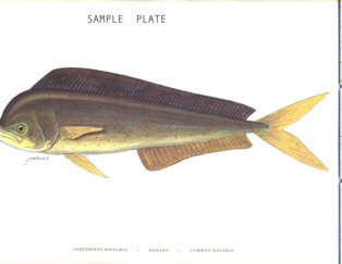 Marine Fishes of El Salvador (Los Cabanos) in English