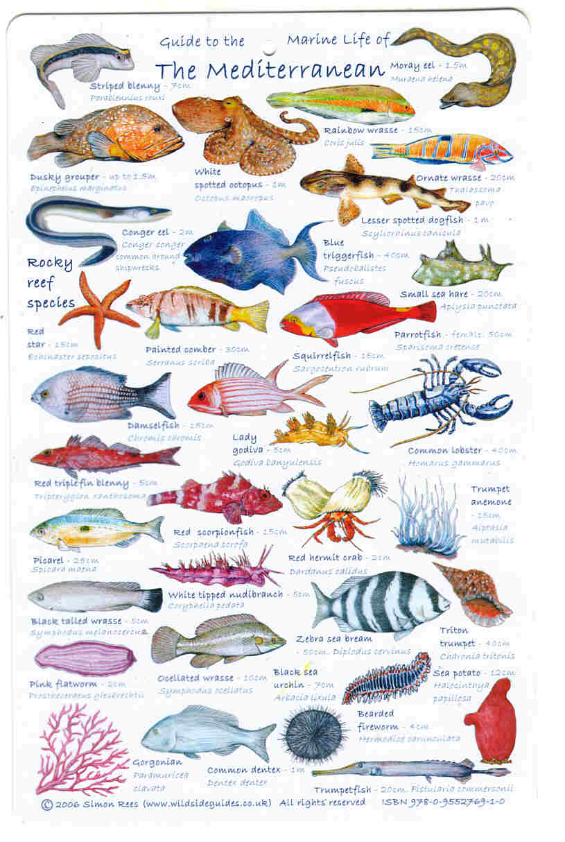 Guide to Mediterranean Fish A high quality fish laminated Identification card